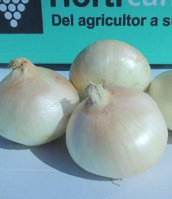 Cebolla Dulce en Sevilla