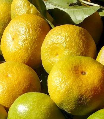 Mandarinas Directas del Árbol en Sevilla