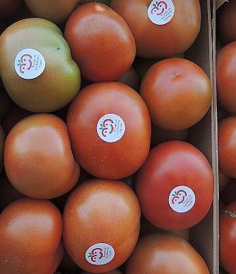 12 - Tomate Pintón de Los Palacios en Sevilla